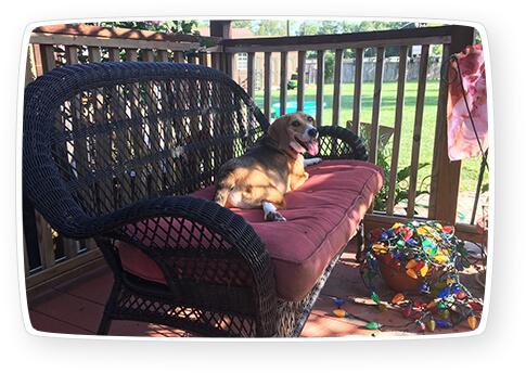dog daycare conroe tx